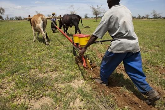 Governo disponibiliza 7 milhões de dólares para agricultura familiar