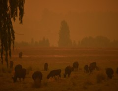'Megaincêndio' na Austrália assola área 4 vezes maior que Nova York