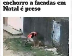 Assassino: Homem quem matou cachorro a facadas é preso em Natal