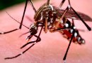 Aumentan casos por dengue, malaria, leptospirosis y afecciones respiratorias