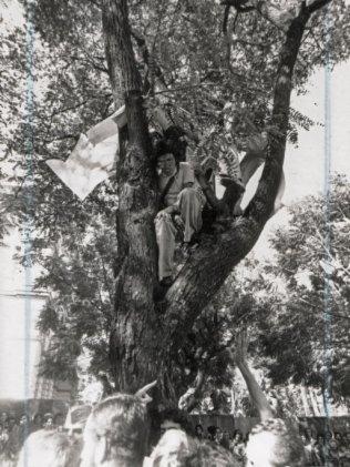 corte árvore Porto Alegre