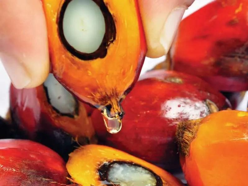 """Vaji i palmës, produkti ushqimor që po na """"vret"""" çdo ditë nga pak."""