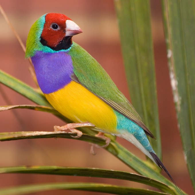 top 10 most colorful birds in the world