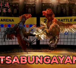 Live Streaming Sabung Ayam Filipina S128