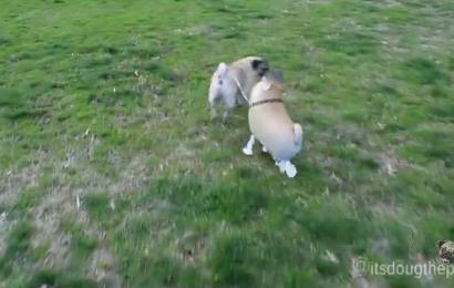 "Info Santai: Anda Pasti Terhibur Menonton Anjing Ini Bersama Rakan ""Imaginasinya"""