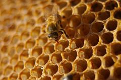 Honey Employees