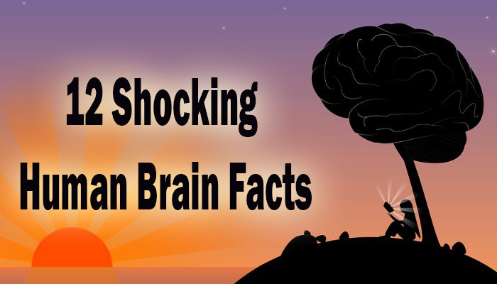Human Brain facts