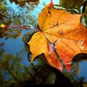 autumn_by_kojnyciuke