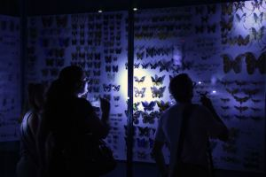 """Visitors light butterflies during a """"dark night"""" visit at the Museum of natural history in Toulouse, southwestern France, on May 21, 2016 as part of the European night of museums. / AFP PHOTO / PASCAL PAVANI"""