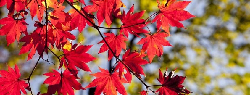 autumn-2789234-1920