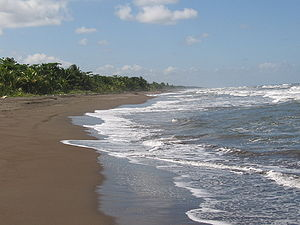 Beach at Tortuguero National Park