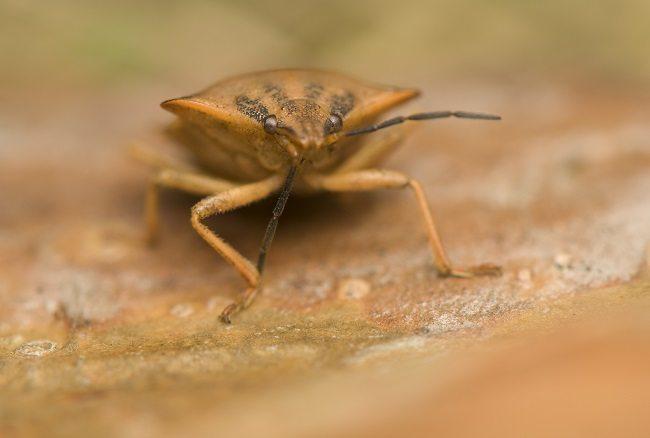 Photo of Health Hazards of Bed Bugs