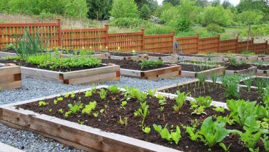 Photo of 3 Health Benefits from Green Space At Home
