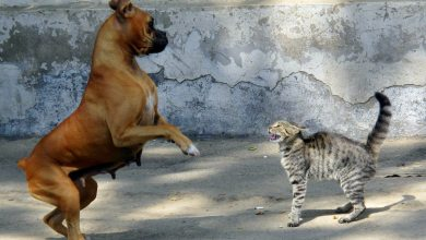 Photo of Dogs VS Cats: Which Makes The Best Family Pet?