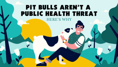 Photo of Are Pit Bulls Really A Threat? [Infographic]