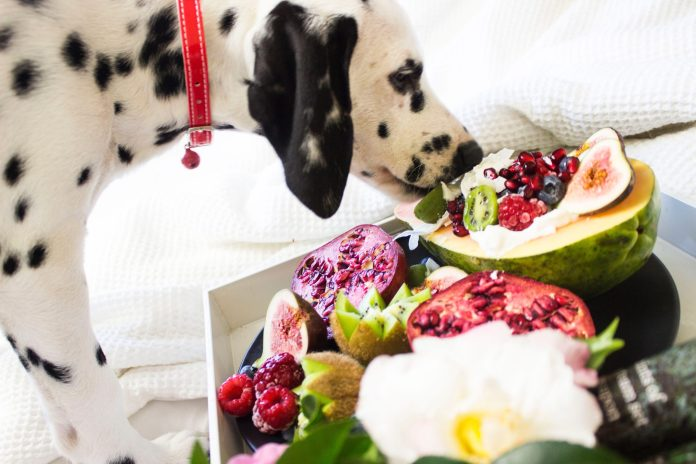 4 Tips To Take Care of Your Senior Dogs Nutrition 2