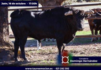 """""""Solanito"""", de Garcigrande, abre la corrida de Jaén"""