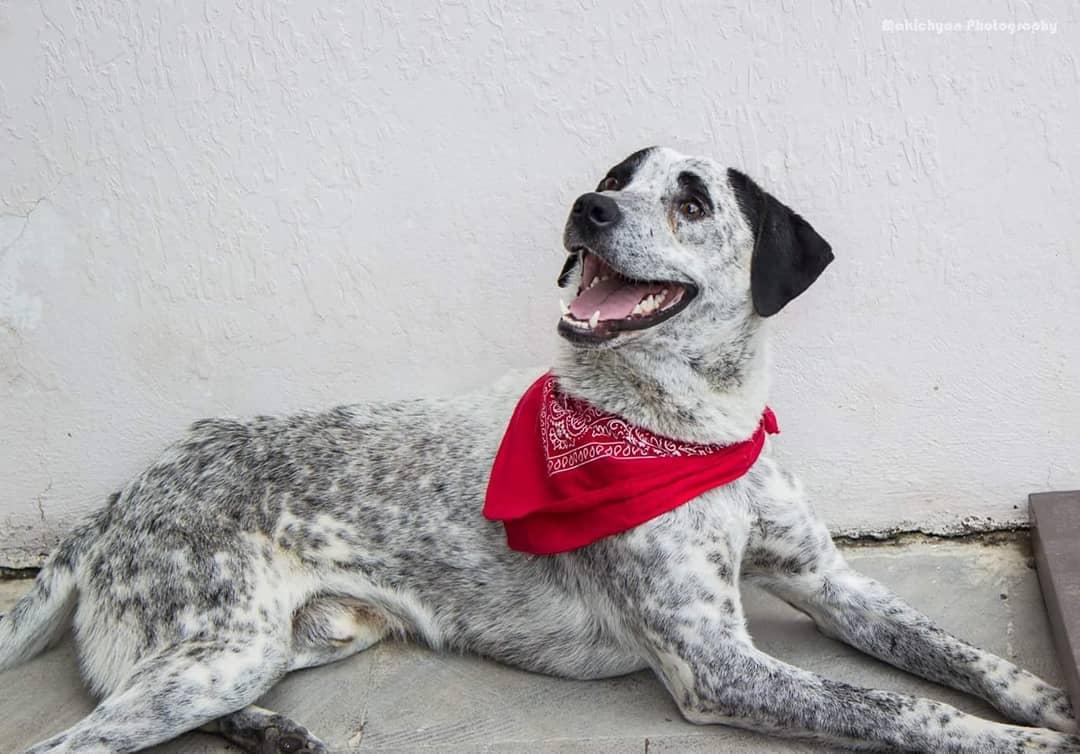 Пес Чало в надежных руках – теперь он будет жить в доме у Пашиняна