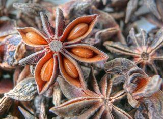 Badiane (anis étoilée)