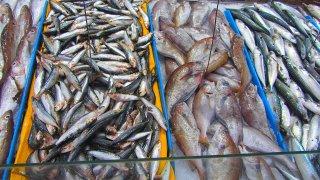 Etal de poisson par Patapof.