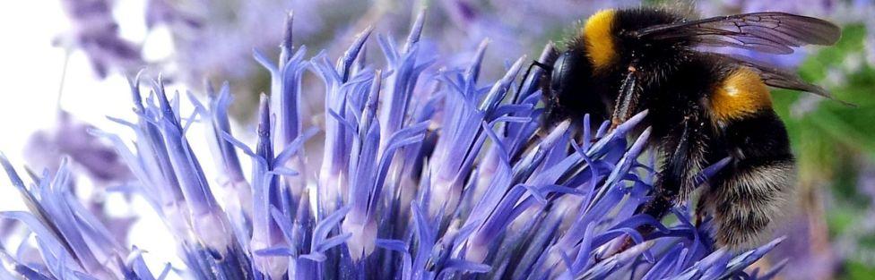 Hécatombe des abeilles.