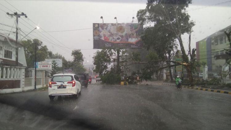 Pohon serkah menimpa kabel di depan RS Elim Rantepao.