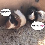 【日本でここだけ!】札幌にあるノースサファリがリニューアル【危険度MAXと直に動物と触れ合える体験型動物園とは?】