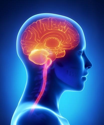 A barreira sangue-cérebro (Hematoencefálica): o sistema de segurança da Natureza