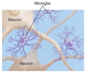 As células da microglia são como olhos no interior do seu cérebro
