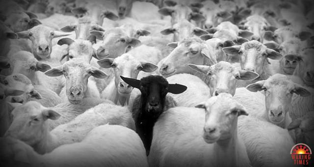 A Imunidade de Grupo é usada para instigar o medo e a culpa