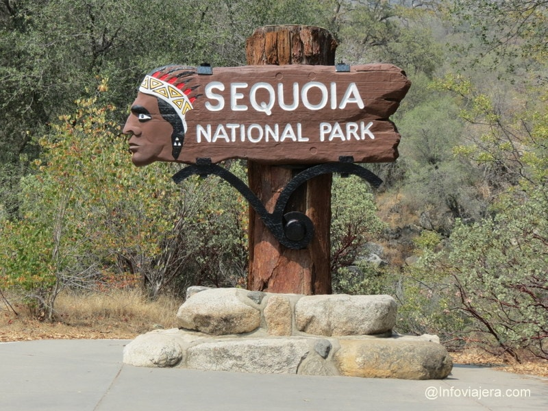 Sequoia4