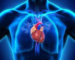 Продукты для сердца - список самой полезной еды для сердца