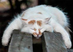 Почему коты спят так много ?