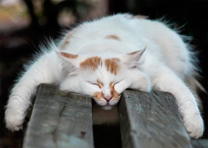 Почему коты спят