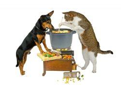 Можно ли кормить кошку собачьим кормом? Или собаку кошачьим. Если нельзя, то почему?