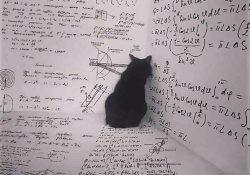 Кот Шредингера: простыми словами. Что это за эксперимент?