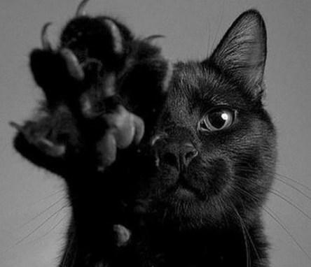 Приметы: Черная кошка во сне - к чему снится и что это значит?