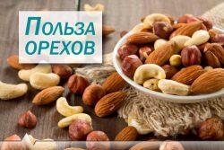 Орехи: чем полезны? Грецкий, кешью, фундук, арахис, миндаль, фисташки