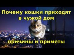 Приметы: Почему кошки приходят в чужой дом — причины