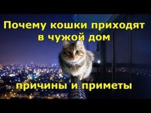 Почему кошки приходят в чужой дом
