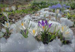 Приметы весны: ранняя или поздняя она будет в этом году?