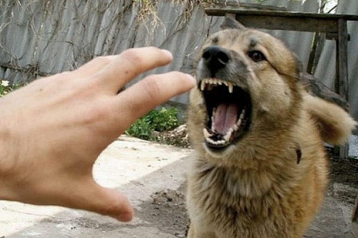 Почему собаку нельзя бить рукой