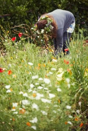 veld-and-sea-flower-workshops