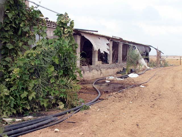 destroyed-chicken-barn