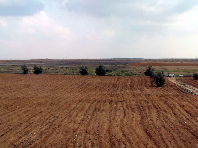 razed-land-and-wall-darlene