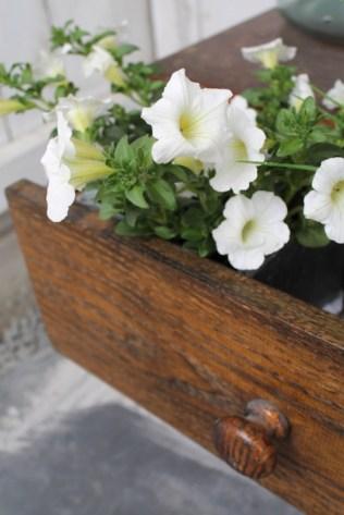 ingebruins-kastje-plant