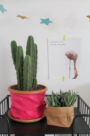 ingebruins-cactusroze