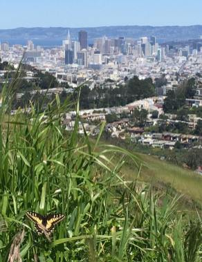 City view from Mt. Davidson.