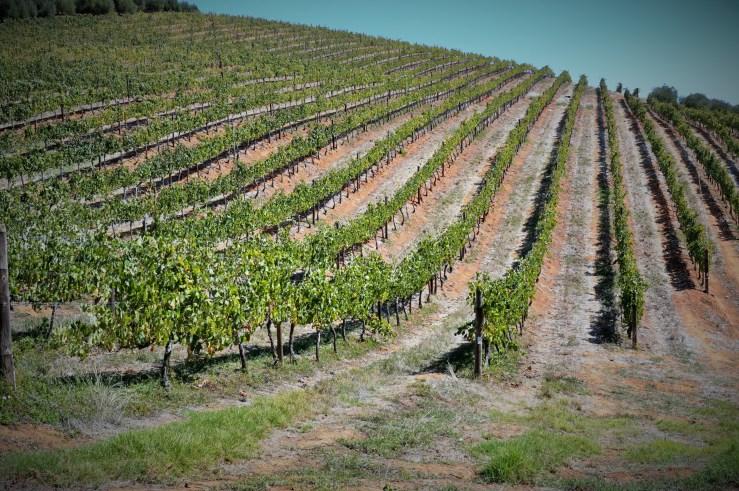 Vineyards at Tokara
