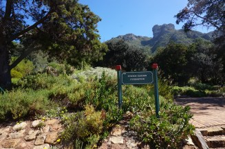 Fynbos at Kirstenbosch Botanical Garden in Cape Town